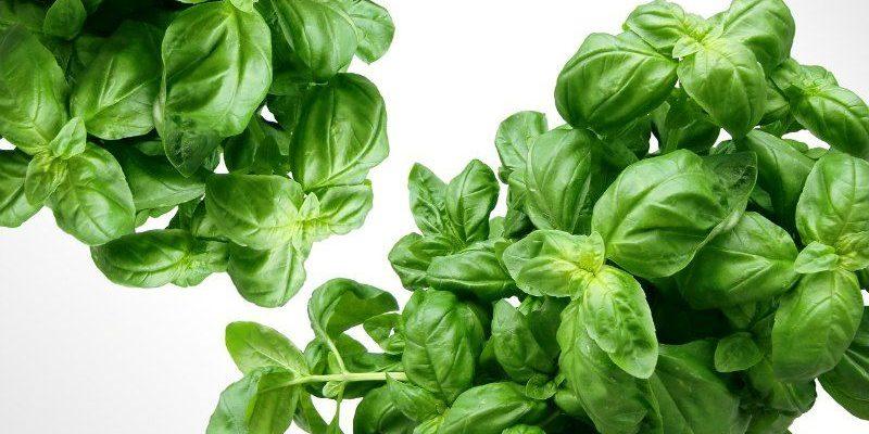 Benicia Garden Herbs