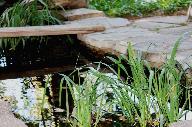 Build Garden Pond