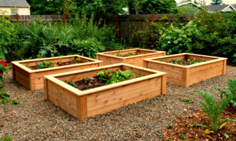 Use Red Cedar for Raised Bed Gardens
