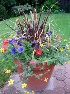 Container Vegetable Gardening Blooming Flowers