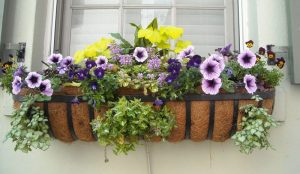 Container Vegetable Gardening Window Flower Garden