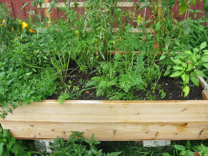 How to start a container garden in any space for Watering vegetable garden