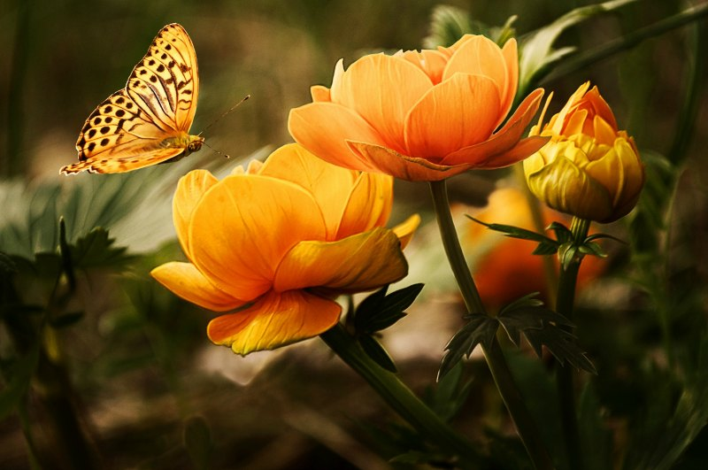 Summer Gardens for Butterflies Flowers Background Butterflies Beautiful