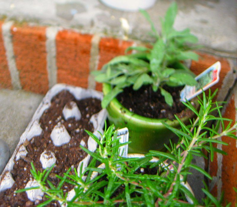 Herb Gardening for Beginners Hex Pots