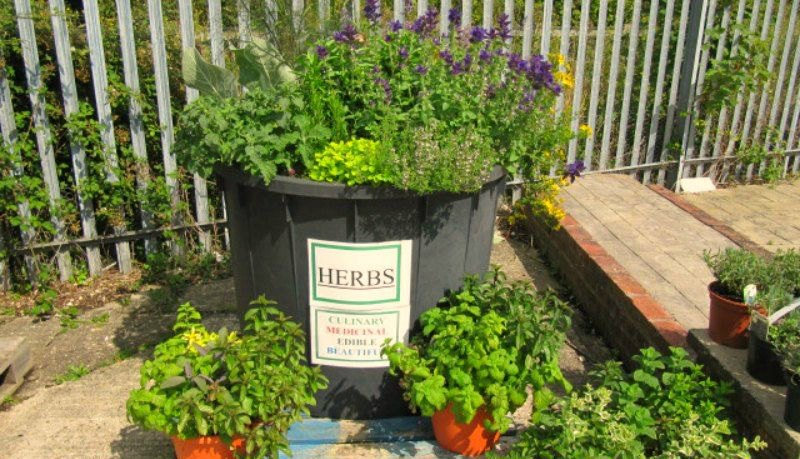 Herb Tubs Herb Gardening for Beginners