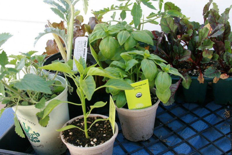 Buy Nursery Plants