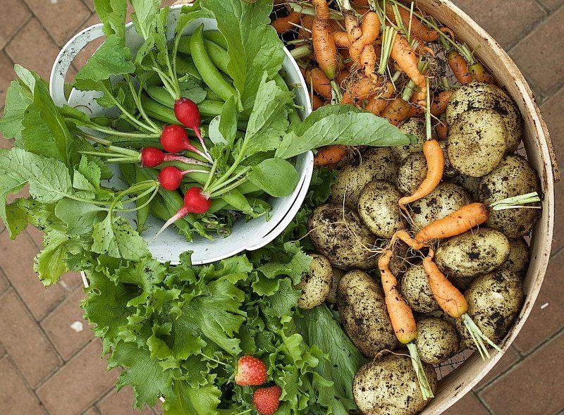 Organic Vegetable Garden Organic Gardening