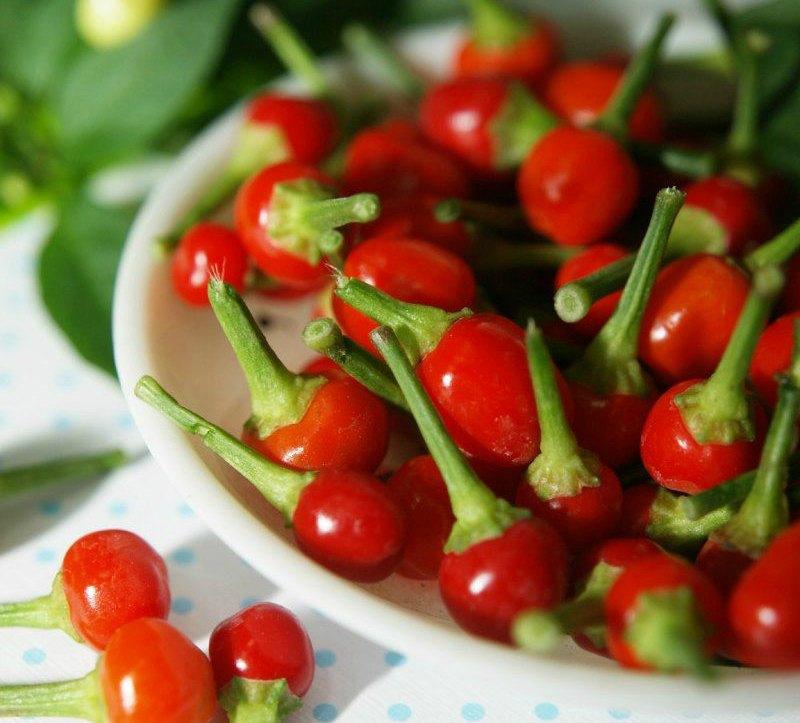Pepper Cherry Hybrid Container Garden