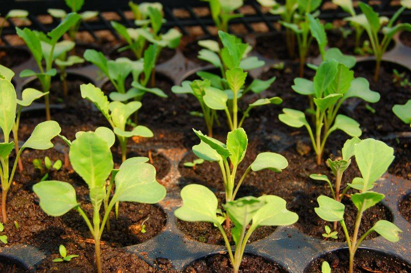 Start with Seeds or Seedlings for Your Small Flower Garden