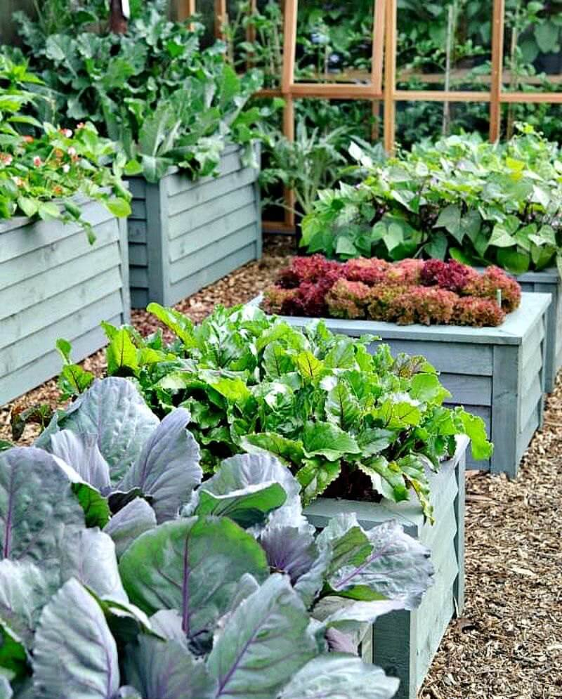 raised bed gardening long 800 139tj - Garden Design Long Narrow