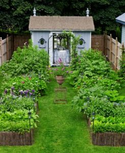 Backyard Vegetable Container Gardens