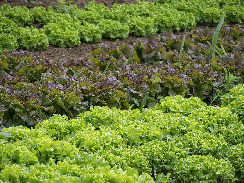 How to Grow More Vegetables in the Same Space