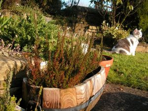 Container Vegetable Gardening Wine Barrel