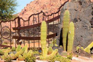 Container Vegetable Gardening Cactus