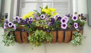 Container Vegetable Gardening Window Flower Garden