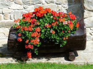 Container Vegetable Gardening Flower Barrel
