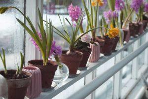 Container Vegetable Gardening Indoor Garden