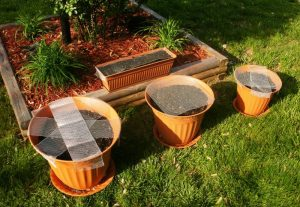 Container Vegetable Gardening Raised Beds Pots