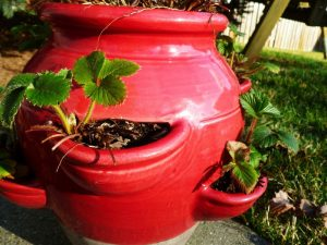 Container Vegetable Gardening Strawberry Pot