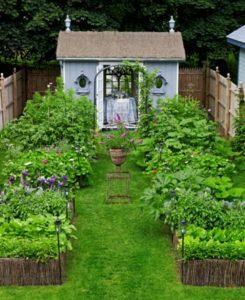 Backyard Vegetable Container Gardens